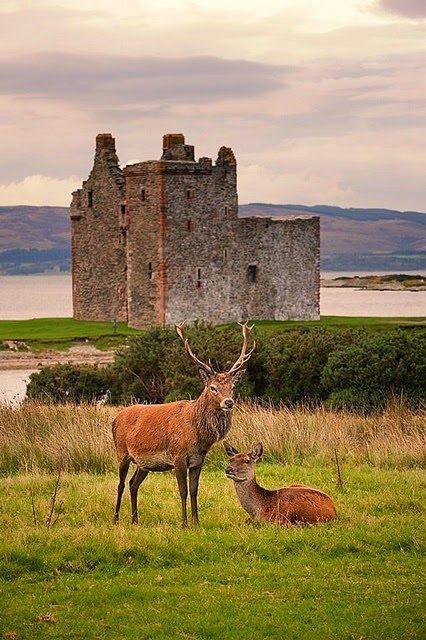 Stags at LochRanza Castle